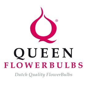 Queen Flowerbulbs