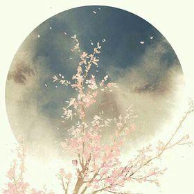 crysanthiom