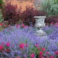 Lavender &