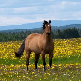 Northernhorse.com