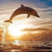 dolfijn Hendriks