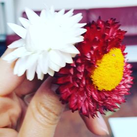 humeyra çiçekler