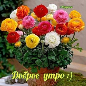 Бабришова Анна