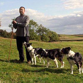 Nij Vyas Sheepdog Training and Experience days