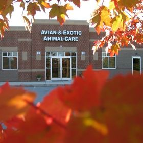Avian & Exotic Animal Care