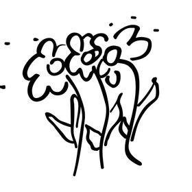 Kvety Silvia