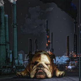 Terri Bulldog
