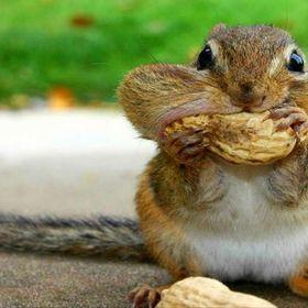 Is Squirrel, Hi
