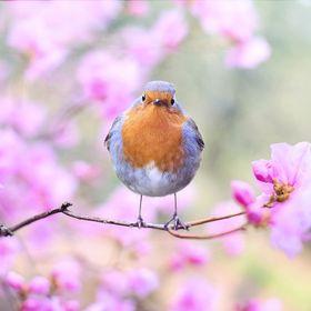 Songbird Publications