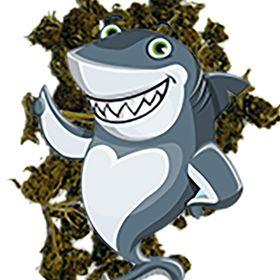 Ganja Shark | Growing Weed | Weed 420 | I Love Weed