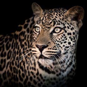 inXS Wildlife