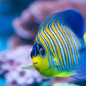 The Reef Tank