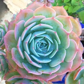 The Simple Succulent