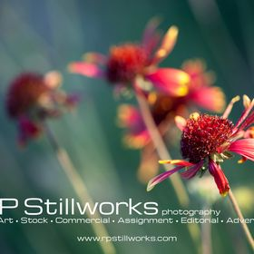 Rp Stillworks Rpstillworks On Pinterest