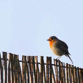 Büşra Kuş
