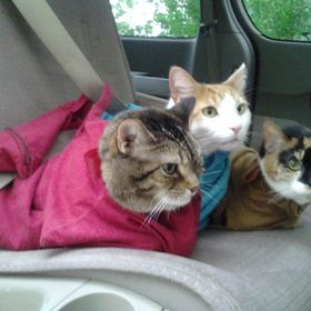 6637e64b35 Cat-in-the-bag Co. (catinthebagccc) on Pinterest