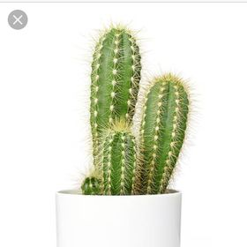 I'mcactus