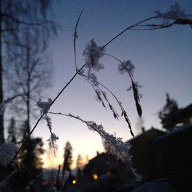 Tuuli Markkanen