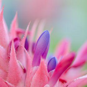Kertinfó - növények, virágok, kertészkedés