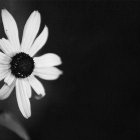 Tuğba Çiçekçilik