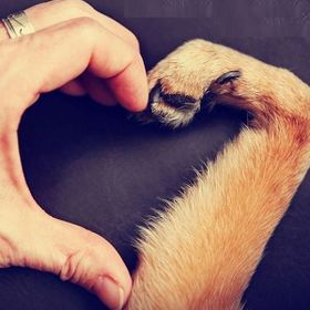 ♥ Small Paw ♥