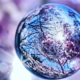 sakura onil