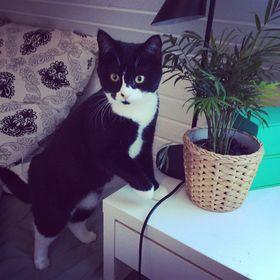 Katten_randi