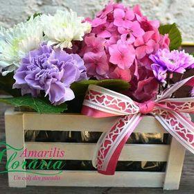 Floraria Amarilis