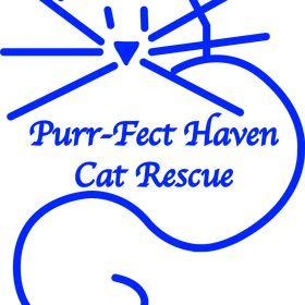 PurrfectHaven CatRescue