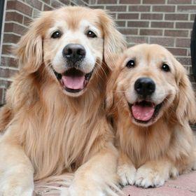 Doggy happy