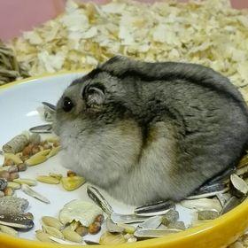 hamster land