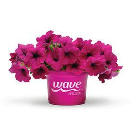 Wave Gardening