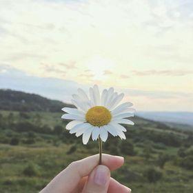 BeyazPapatya