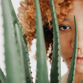 Die Kraft der Aloe Vera