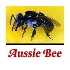 Aussie Bee