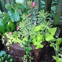 Lauren's Garden Service