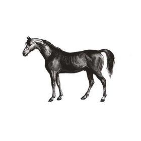 BLACK HORSE DESIGN
