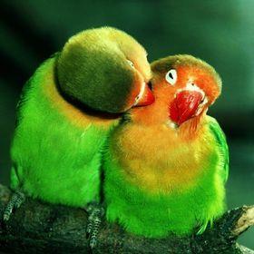 Taya Green Pinterest Profile Picture