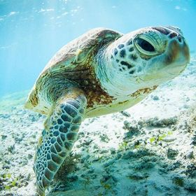 Finding Sea Turtles Blog