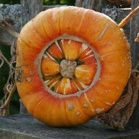 Pumpkin Beth