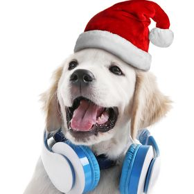Pets Care|pet supplies products cats|pet supplies products dog care|pet supplies dog|pet supplies ca