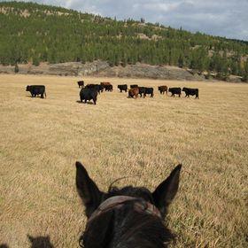 Montana Better Beef