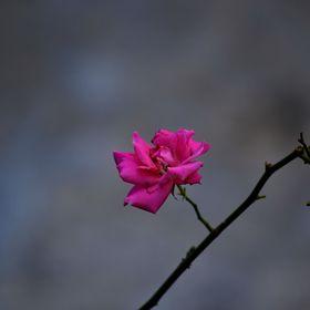 Alpriyant Photograph
