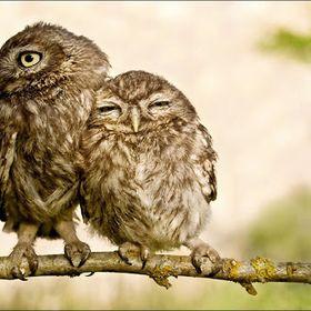 Sammi Bird
