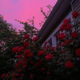 flower girl🌹