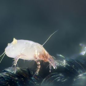 Dust Mite Solutions | An Allergy Blog With Tips and Experience