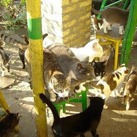 Cat Shelter Felix