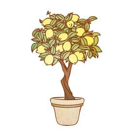 Lemon Tree Cards