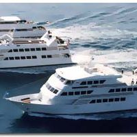 Smooth Sailing Celebrations Cruisecamille Profile Pinterest