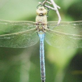 For Dragonflies And Me Blog